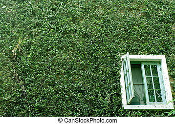 green plant wall with white window