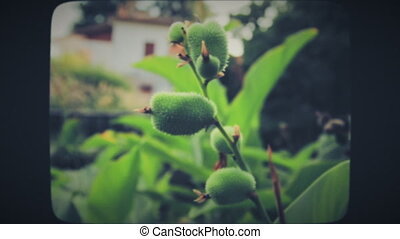 Green plant with spiny flowers, close up. Vintage Film Look.
