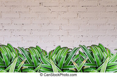 Green plant with white brick wall