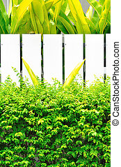 green plant with wood white fence