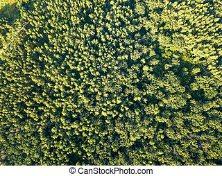Green plantings of trees on a summer day. Aerial view from a drone deciduous forest. Ecological concept