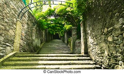 Green plants and stone stairs.