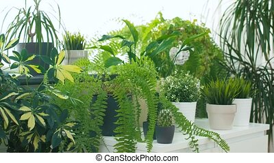 green plants at home garden - gardening, botany and flora...