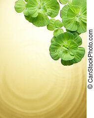 green plants floating on water - green plant floating on ...