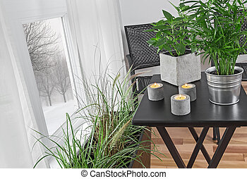 Green plants in a room, and winter landscape behind the window