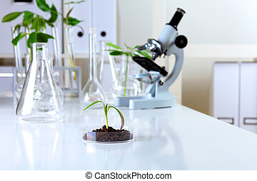 Green plants in biology laborotary - Green plants and...