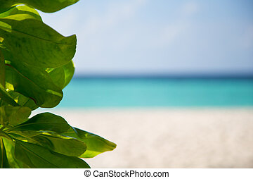 Green plants in front of a beach