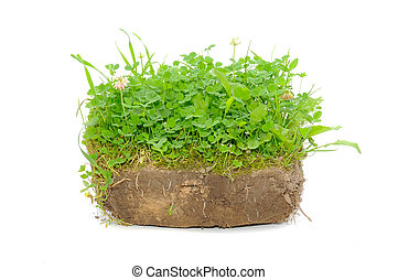Green Plants in Soil Isolated on White Background