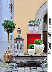 Green plants in the pots
