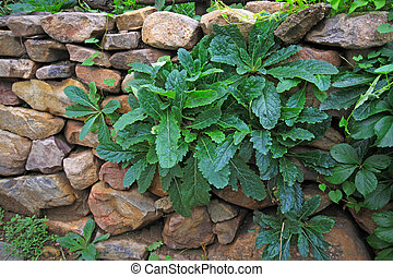green plants in the stone wall gaps