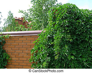 green plants on a brick wall