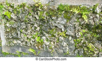 Green plants on aged wall.