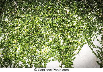 Green plants on concrete wall