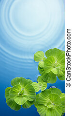 green plants on water - green plants floating on water with ...