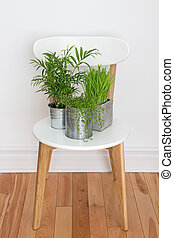 Green plants on white chair