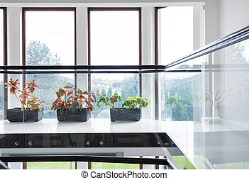 Green plants on window sill