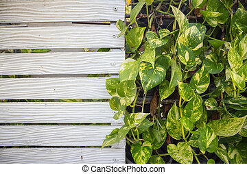 Green plants on wooden wall