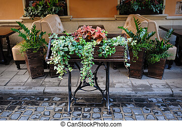 green plants outside in a cafe of Lviv
