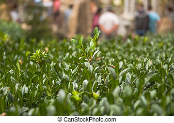 Green plants photographed with soft focus. Carpet from grass, coverage of green leaves, eco, blurred background