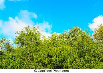 green plants under a blue sky