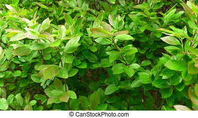 Green plants with beautiful spring foliage close. FHD stock footage.