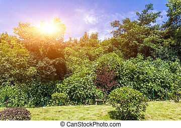 Green plants with sunlight