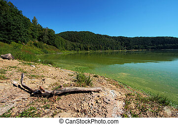 Green, polluted water in the lake