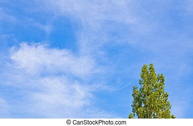 Green poplar against the blue sky