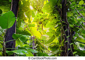 Green Pothos on tree in the garden