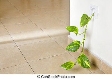 Green Power - Fresh green shoot growing out of an...