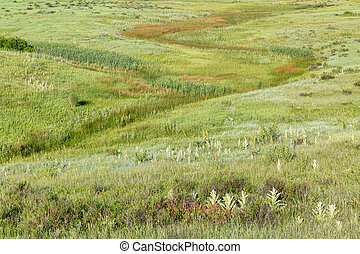 green prairie at Rocky Mountains foothills