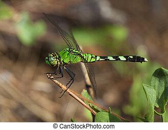 Green predator