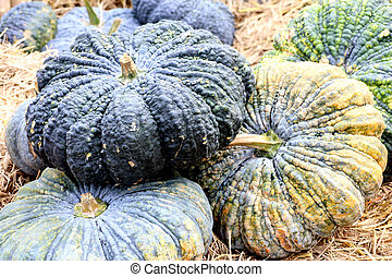 Green pumpkins on the rice straw background