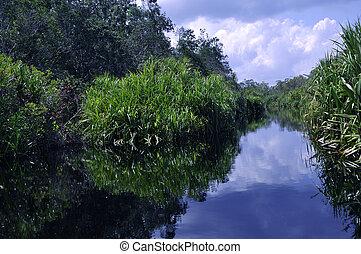 Green rainforest along the River - Lush green rainforest...