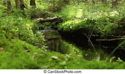 green rainforest stream sunlit dolly shot