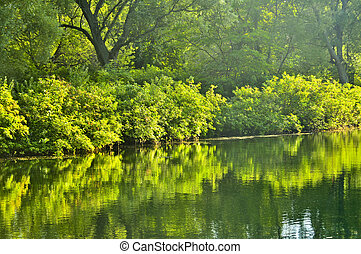 Green reflections in water - Reflection of green trees in...