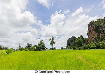 green rice field and the big rock mountain in Thailand and beautiful cloudy sky