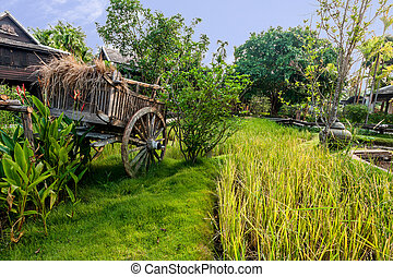 Green rice field in the villa, Thailand
