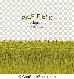 Green rice field on checkered background. Colorful vector ...