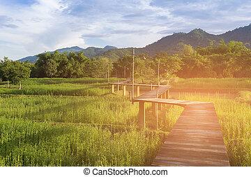 Green rice field with wood walk way