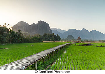 Green rice fields and mountains, Vang Vieng, Laos