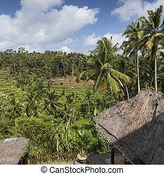 Green rice fields on Bali island, Jatiluwih near Ubud, Indonesia