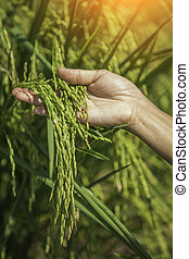 Green rice in woman's hands