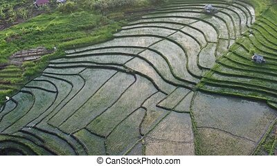 Green rice terrace and agricultural land with crops....