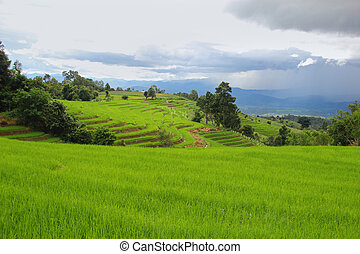 Green Rice Terraced Fields and sky after rain, Papongpieng, Chian