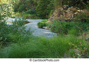 A dry riverbed with beautiful green plants