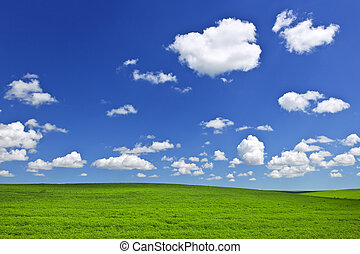 Green rolling hills under blue sky - Lush green lentil and...