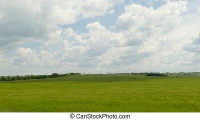 Green Rural Field Under Cloudy Landscape