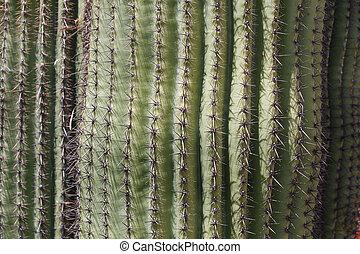 green saguaros