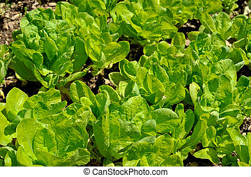 Green salad closeup